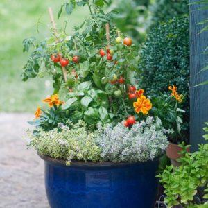 Patio Planter Classes