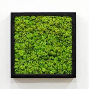 Moss Frame Classes