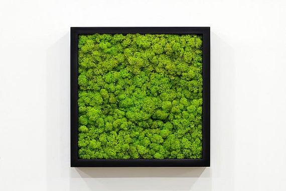 Moss Frame Class